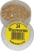 24 Wax Worms packed in plastic container.
