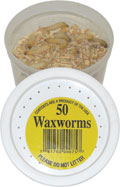 50 Wax Worms packed in plastic container.